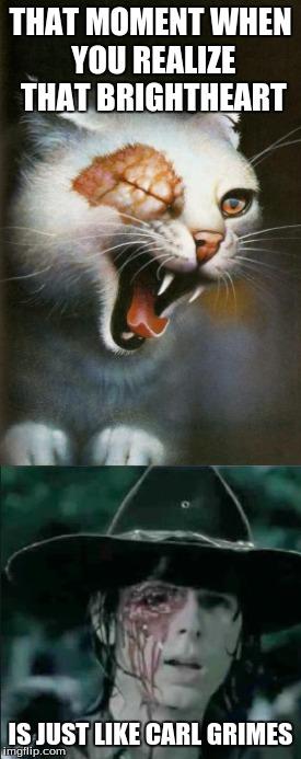 Warrior Cats Memes Gifs Imgflip