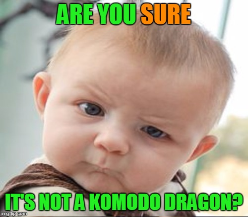 ARE YOU SURE IT'S NOT A KOMODO DRAGON? SURE | made w/ Imgflip meme maker