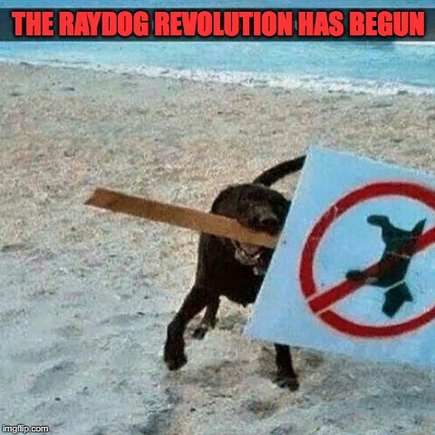 The Dawn of a New Era |  THE RAYDOG REVOLUTION HAS BEGUN | image tagged in raydog,revolution | made w/ Imgflip meme maker