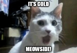 meow bout dat | IT'S COLD MEOWSIDE! | image tagged in meow bout dat | made w/ Imgflip meme maker