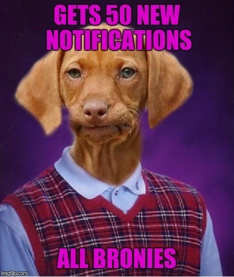 Bad Luck Raydog | GETS 50 NEW NOTIFICATIONS ALL BRONIES | image tagged in bad luck raydog | made w/ Imgflip meme maker