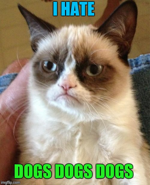Grumpy Cat Meme | I HATE DOGS DOGS DOGS | image tagged in memes,grumpy cat | made w/ Imgflip meme maker