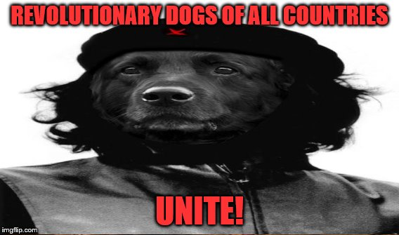 REVOLUTIONARY DOGS OF ALL COUNTRIES UNITE! | made w/ Imgflip meme maker