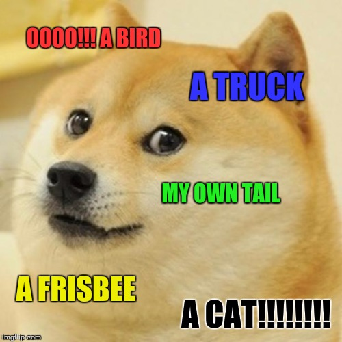 Dang that dog is pumped up!! sheeeesh | OOOO!!! A BIRD A TRUCK MY OWN TAIL A FRISBEE A CAT!!!!!!!! | image tagged in memes,doge | made w/ Imgflip meme maker