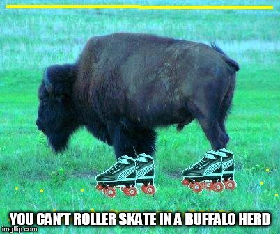 DMB JIMI THING | YOU CAN'T ROLLER SKATE IN A BUFFALO HERD | image tagged in dmb,dave matthews band,buffalo,jimi thing,you cant roller skate in a buffalo herd | made w/ Imgflip meme maker