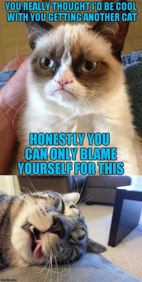 Humans.. can't live with them.. can't operate a can opener without them... | YOU REALLY THOUGHT I'D BE COOL WITH YOU GETTING ANOTHER CAT HONESTLY YOU CAN ONLY BLAME YOURSELF FOR THIS | image tagged in grumpy cat,deathclaw | made w/ Imgflip meme maker