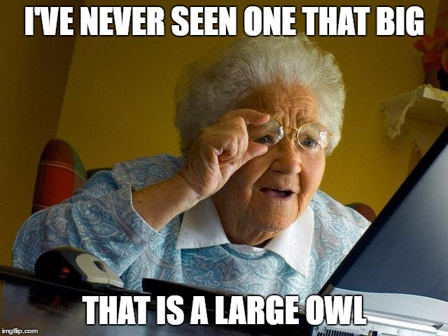 Grandma Finds The Internet Meme | I'VE NEVER SEEN ONE THAT BIG THAT IS A LARGE OWL | image tagged in memes,grandma finds the internet | made w/ Imgflip meme maker