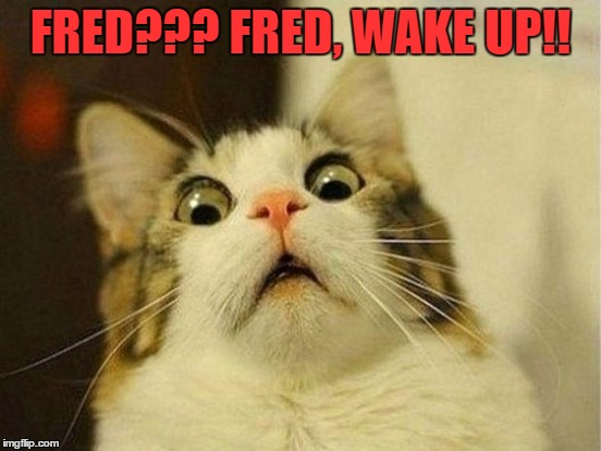 FRED??? FRED, WAKE UP!! | made w/ Imgflip meme maker