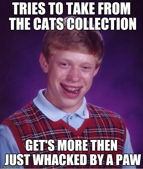 Bad Luck Brian Meme | TRIES TO TAKE FROM THE CATS COLLECTION GET'S MORE THEN JUST WHACKED BY A PAW | image tagged in memes,bad luck brian | made w/ Imgflip meme maker