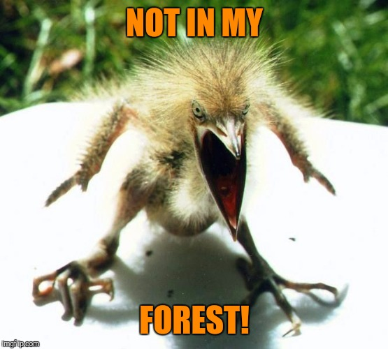 Angry bird | NOT IN MY FOREST! | image tagged in angry bird | made w/ Imgflip meme maker