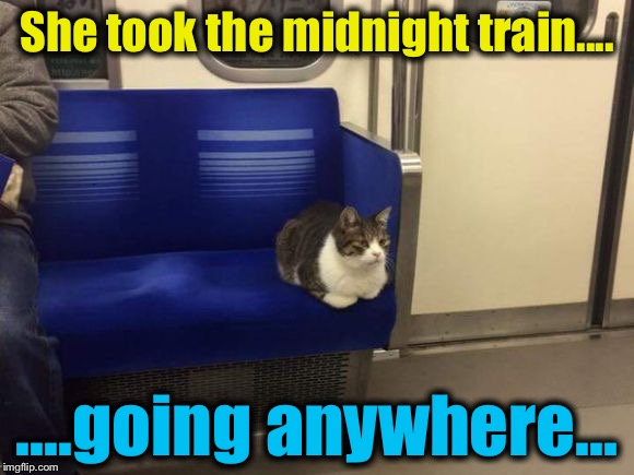 "Cat on a ""Journey""..... 