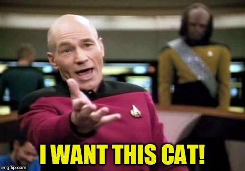 Picard Wtf Meme | I WANT THIS CAT! | image tagged in memes,picard wtf | made w/ Imgflip meme maker