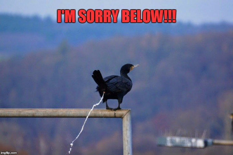 I'M SORRY BELOW!!! | made w/ Imgflip meme maker