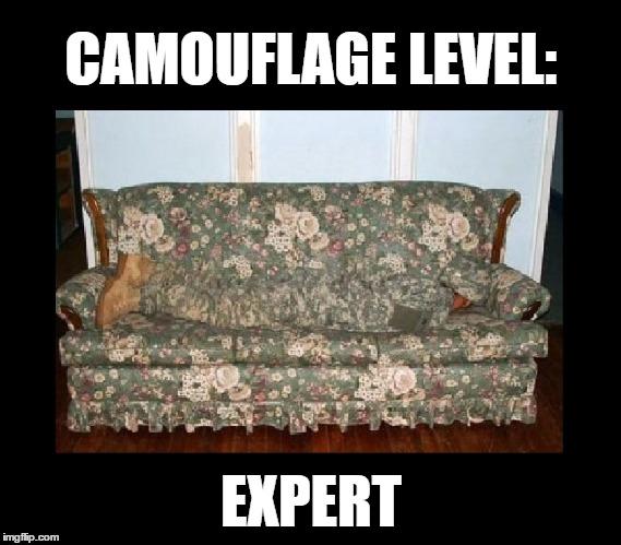 camouflage Memes & GIFs - Imgflip