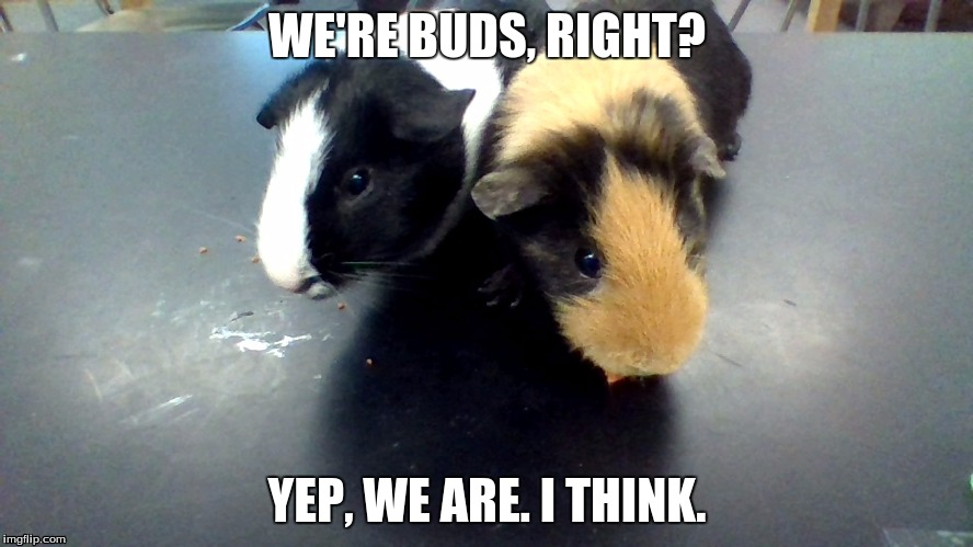 buds | WE'RE BUDS, RIGHT? YEP, WE ARE. I THINK. | image tagged in 4 | made w/ Imgflip meme maker