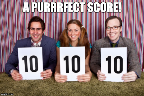 A PURRRFECT SCORE! | made w/ Imgflip meme maker