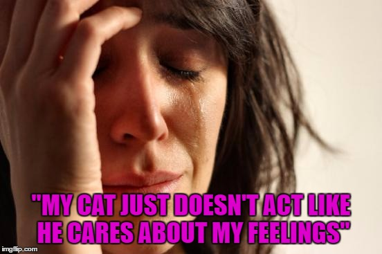 "First World Problems Meme | ""MY CAT JUST DOESN'T ACT LIKE HE CARES ABOUT MY FEELINGS"" 