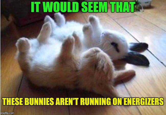 They Stopped Going And Going And Going And Going | IT WOULD SEEM THAT THESE BUNNIES AREN'T RUNNING ON ENERGIZERS | image tagged in memes,bunnies,energizer bunny,google images | made w/ Imgflip meme maker