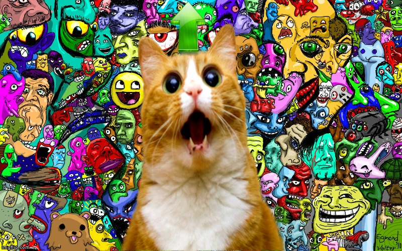 Shocked kitty | image tagged in shocked kitty | made w/ Imgflip meme maker