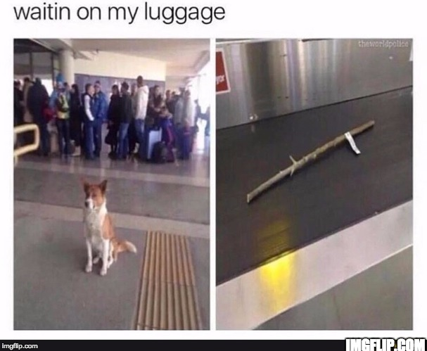 IMGFLIP.COM | image tagged in memes,funnny,funny memes,dogs,airport,funny | made w/ Imgflip meme maker
