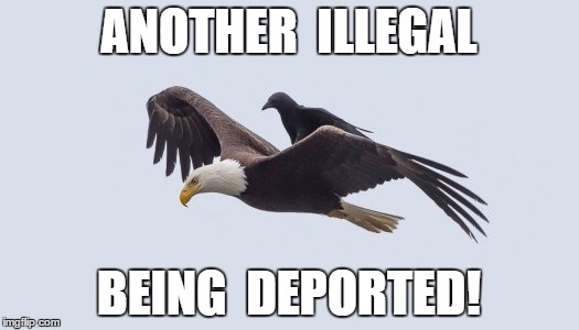 Illegal Deportation | ANOTHER  ILLEGAL BEING  DEPORTED! | image tagged in funny,meme | made w/ Imgflip meme maker