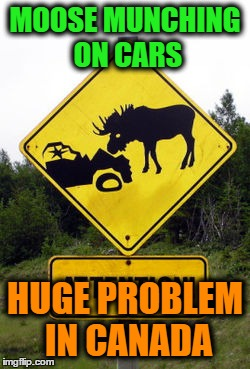 MOOSE MUNCHING ON CARS HUGE PROBLEM IN CANADA | image tagged in memes,signs,moose | made w/ Imgflip meme maker
