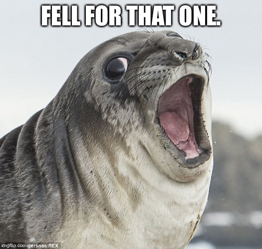 Joke Seal | FELL FOR THAT ONE. | image tagged in joke seal | made w/ Imgflip meme maker