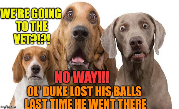 shocked dogs | WE'RE GOING TO THE VET?!?! NO WAY!!! OL' DUKE LOST HIS BALLS LAST TIME HE WENT THERE | image tagged in shocked dogs | made w/ Imgflip meme maker
