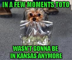 Time to leave Kansas way behind!!! | IN A FEW MOMENTS TOTO WASN'T GONNA BE IN KANSAS ANYMORE | image tagged in dog with bud,memes,dogs,funny,animals,funny animals | made w/ Imgflip meme maker