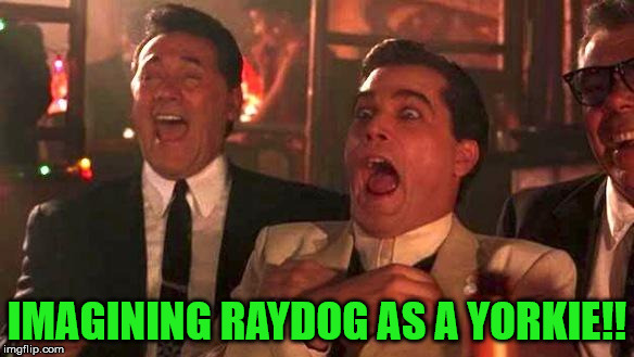 Goodfellas Laughing | IMAGINING RAYDOG AS A YORKIE!! | image tagged in goodfellas laughing | made w/ Imgflip meme maker