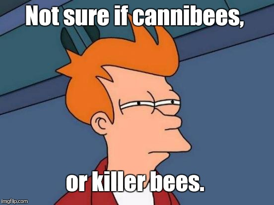 Futurama Fry Meme | Not sure if cannibees, or killer bees. | image tagged in memes,futurama fry | made w/ Imgflip meme maker