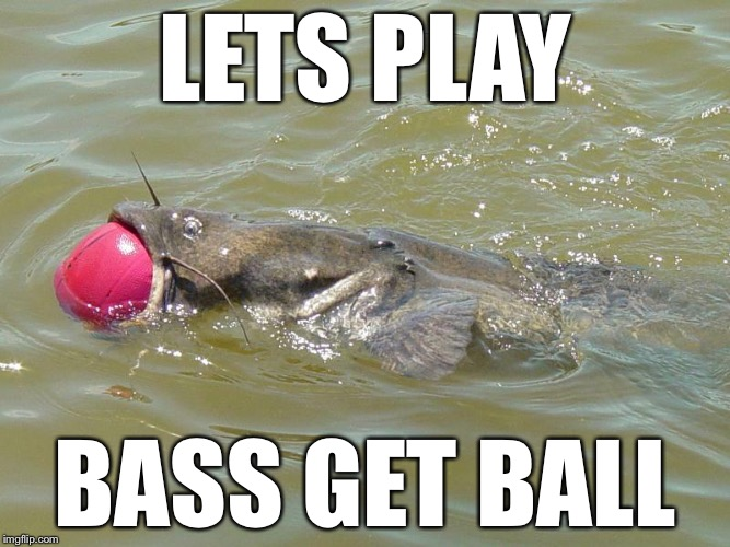 LETS PLAY BASS GET BALL | image tagged in memes,basketball,funny animals,bad puns | made w/ Imgflip meme maker