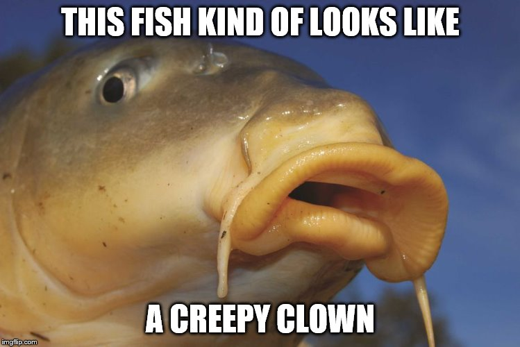 Carp | THIS FISH KIND OF LOOKS LIKE A CREEPY CLOWN | image tagged in carp | made w/ Imgflip meme maker