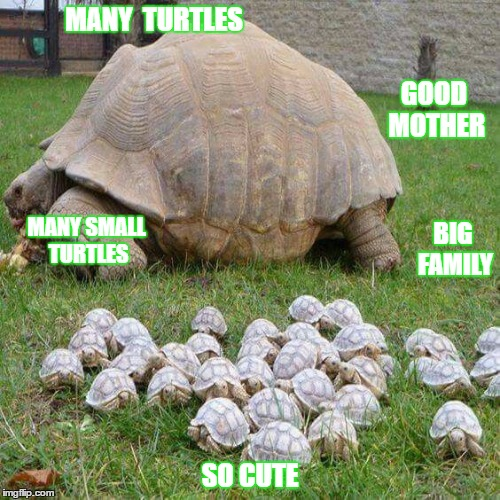 turtle time | MANY  TURTLES SO CUTE BIG FAMILY MANY SMALL TURTLES GOOD MOTHER | image tagged in turtle meme | made w/ Imgflip meme maker