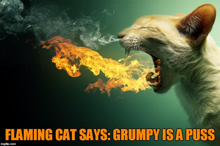 FLAMING CAT SAYS: GRUMPY IS A PUSS | made w/ Imgflip meme maker