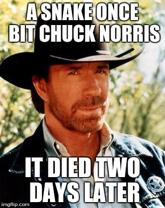 Chuck Norris Meme | A SNAKE ONCE BIT CHUCK NORRIS IT DIED TWO DAYS LATER | image tagged in memes,chuck norris | made w/ Imgflip meme maker