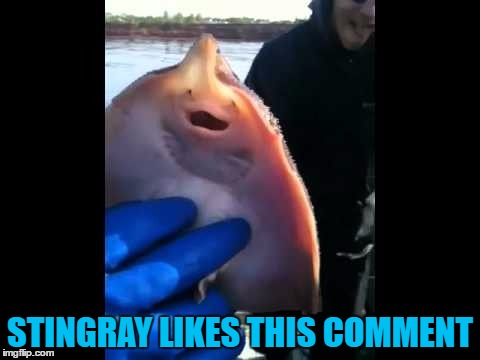 STINGRAY LIKES THIS COMMENT | made w/ Imgflip meme maker