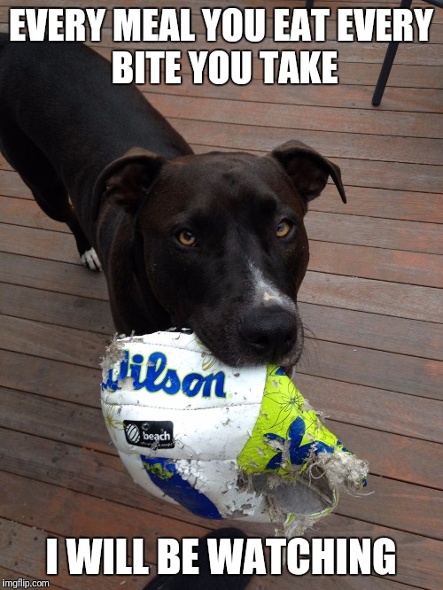 my dog every day | EVERY MEAL YOU EATEVERY BITE YOU TAKE I WILL BE WATCHING | image tagged in scumbag dog | made w/ Imgflip meme maker