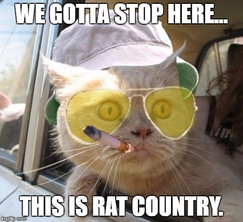 Fear And Loathing Cat | WE GOTTA STOP HERE... THIS IS RAT COUNTRY. | image tagged in memes,fear and loathing cat | made w/ Imgflip meme maker
