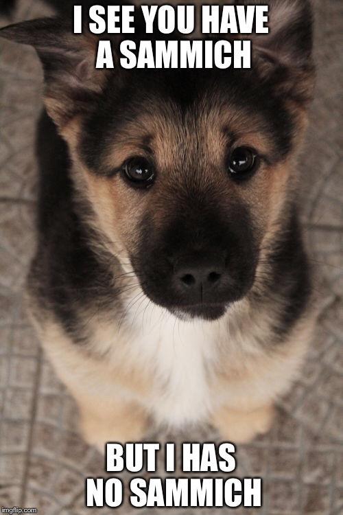 dog begging imgflip