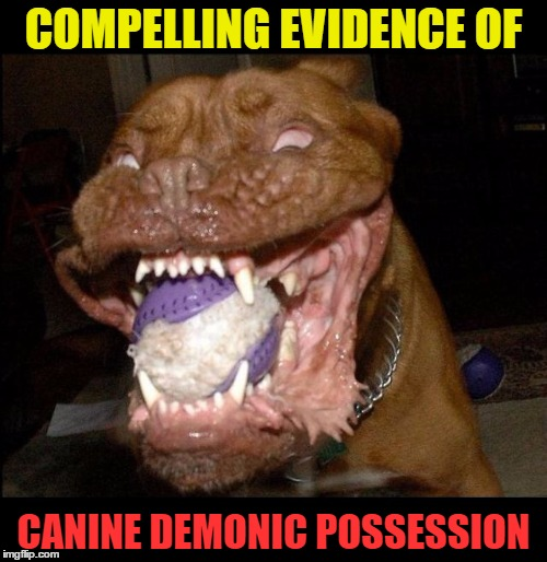 Demonic Possession | COMPELLING EVIDENCE OF CANINE DEMONIC POSSESSION | image tagged in funny memes,dog,crazy dog,wmp,possessed,demonic | made w/ Imgflip meme maker