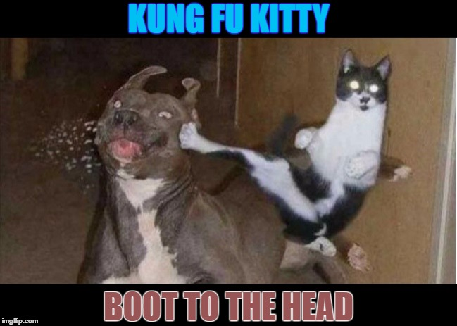 Kung Fu Kitty |  KUNG FU KITTY; BOOT TO THE HEAD | image tagged in funny memes,kung fu,cats and dogs,wmp | made w/ Imgflip meme maker
