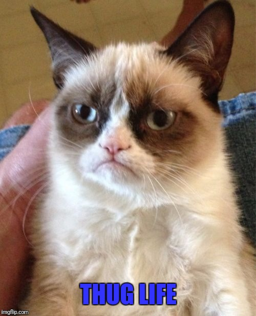 Grumpy Cat Meme | THUG LIFE | image tagged in memes,grumpy cat | made w/ Imgflip meme maker