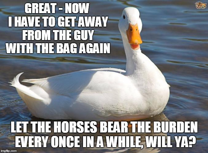 GREAT - NOW I HAVE TO GET AWAY FROM THE GUY WITH THE BAG AGAIN LET THE HORSES BEAR THE BURDEN EVERY ONCE IN A WHILE, WILL YA? | made w/ Imgflip meme maker