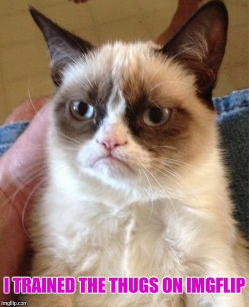 Grumpy Cat Meme | I TRAINED THE THUGS ON IMGFLIP | image tagged in memes,grumpy cat | made w/ Imgflip meme maker