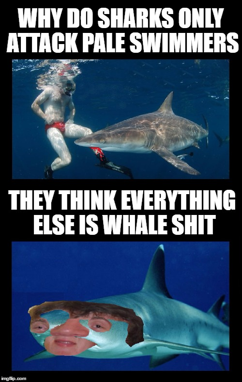 Is it because they're easier to see? | WHY DO SHARKS ONLY ATTACK PALE SWIMMERS THEY THINK EVERYTHING ELSE IS WHALE SHIT | image tagged in memes,funny,sharks,jaws,swimming,10 guy | made w/ Imgflip meme maker