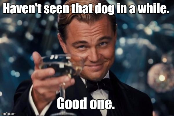 Leonardo Dicaprio Cheers Meme | Haven't seen that dog in a while. Good one. | image tagged in memes,leonardo dicaprio cheers | made w/ Imgflip meme maker