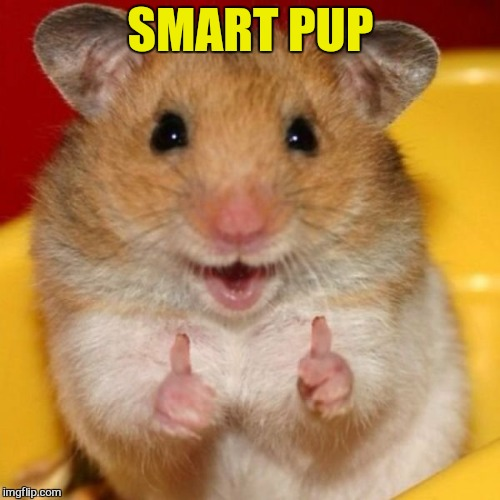 Two Thumbs Up | SMART PUP | image tagged in two thumbs up | made w/ Imgflip meme maker