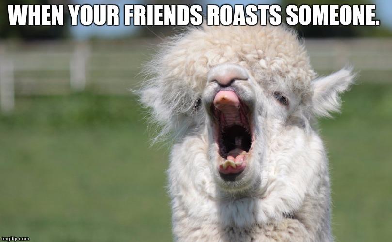 1jp5ut alpaca hahahaha imgflip,Alpaca Meme Generator