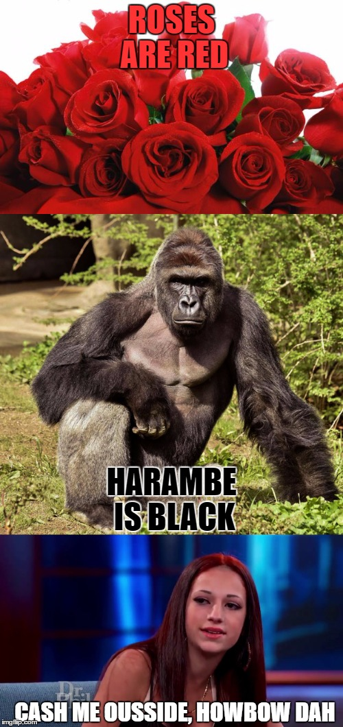 Hope Everyone Had A Good Valentine's Day | ROSES ARE RED HARAMBE IS BLACK CASH ME OUSSIDE, HOWBOW DAH | image tagged in valentine's day,roses are red,harambe,cash me ousside how bow dah | made w/ Imgflip meme maker